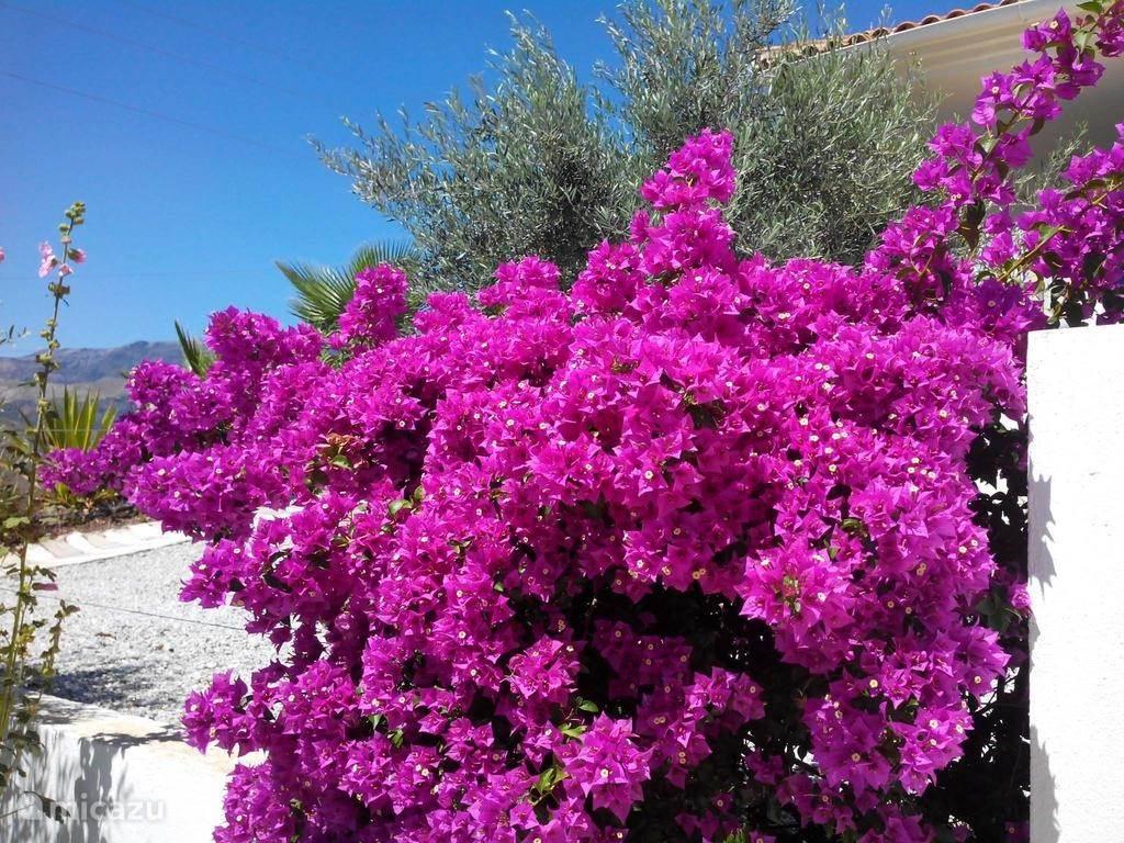 De overdaad aan bloemen in de residentie.