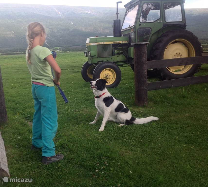 Spelen met Nordy (onze hond)