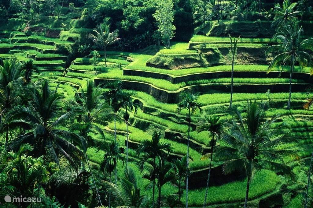 Cultuur en natuur in Bali