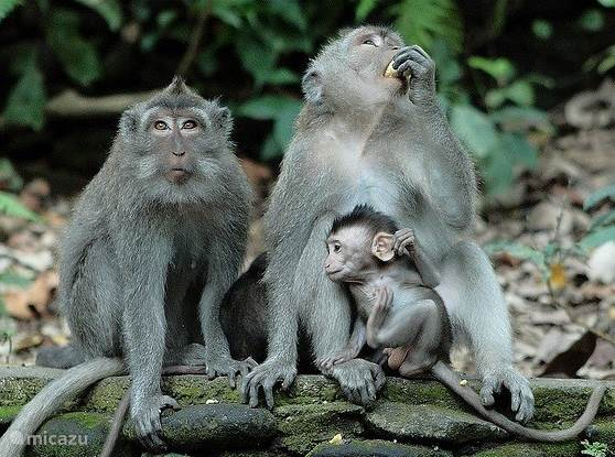 The neighbours of Monkey Forest are waiting for you