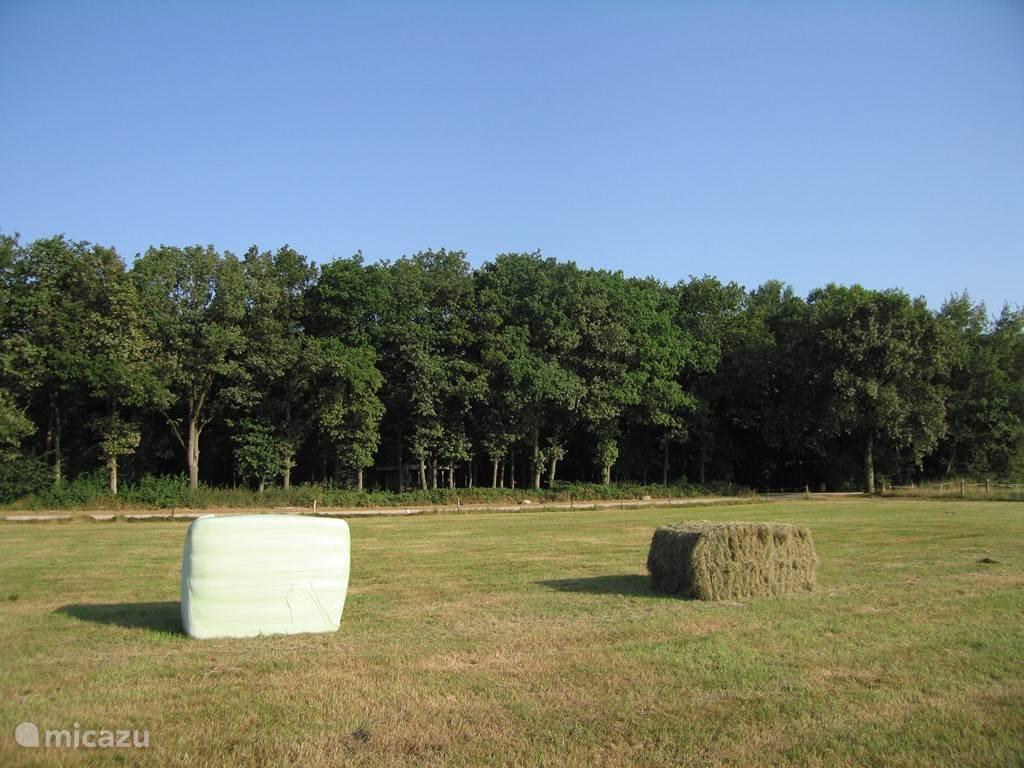 Vooraanzicht van ons eigen bos. In de weide lopen nu wilde koeien van het Drentse landschap. Over het algemeen tref je er Schotse hooglanders aan.