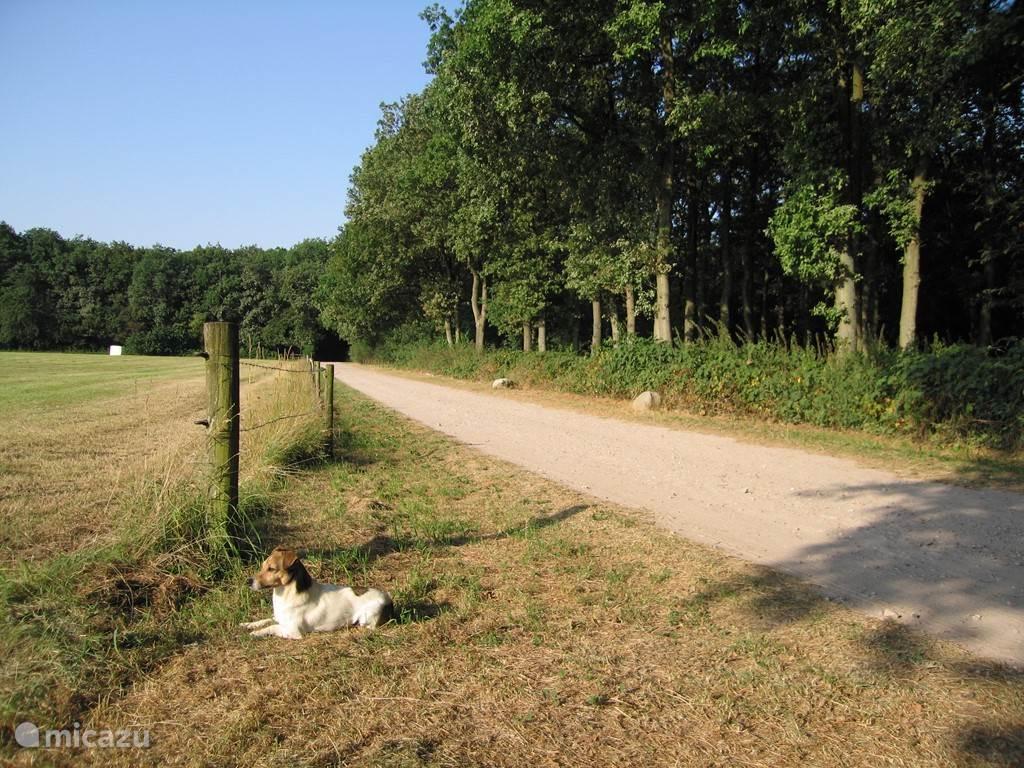 Het rechter bos behoort tot ons terrein. Het weiland is onderdeel van het Drents landschap en er lopen wilde koeien (Schotse Hooglanders of Spaanse koeien)