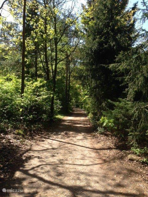 Onverharde paden op het park