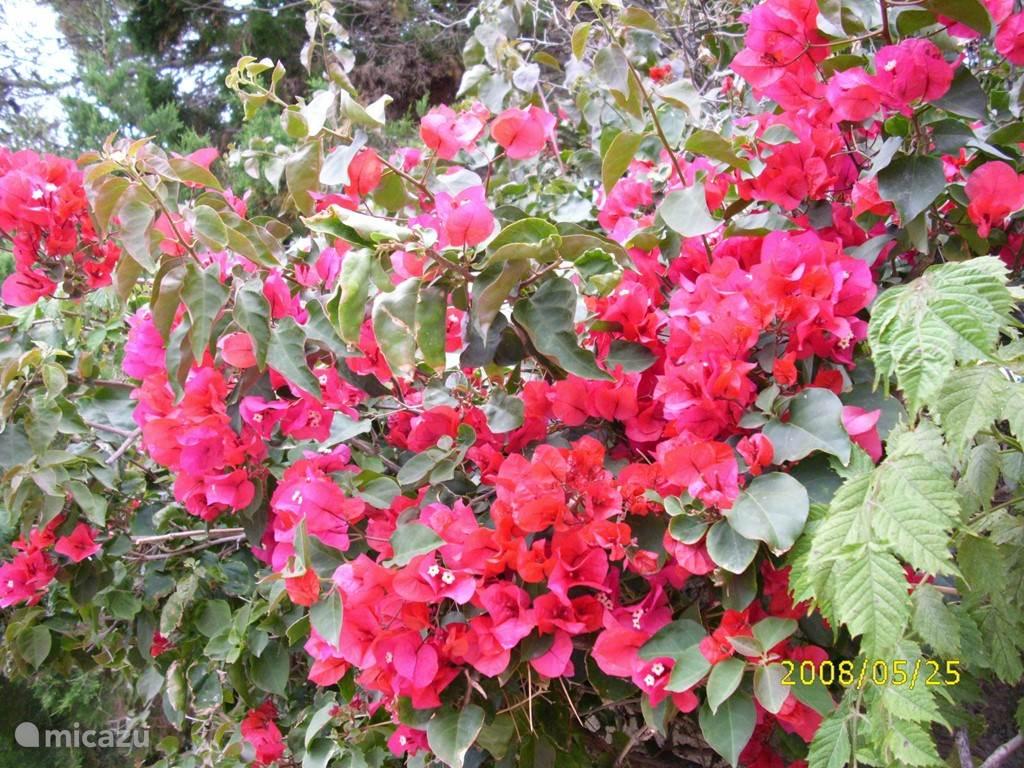 bloei in mei