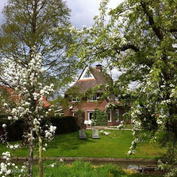 de mooiste bloesem in de gaard in het voorjaar