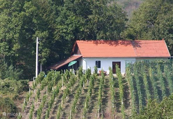 Vakantiehuis Kroatië, Varazdin, Gornja Voca Boerderij Vinograd GornjaVoca