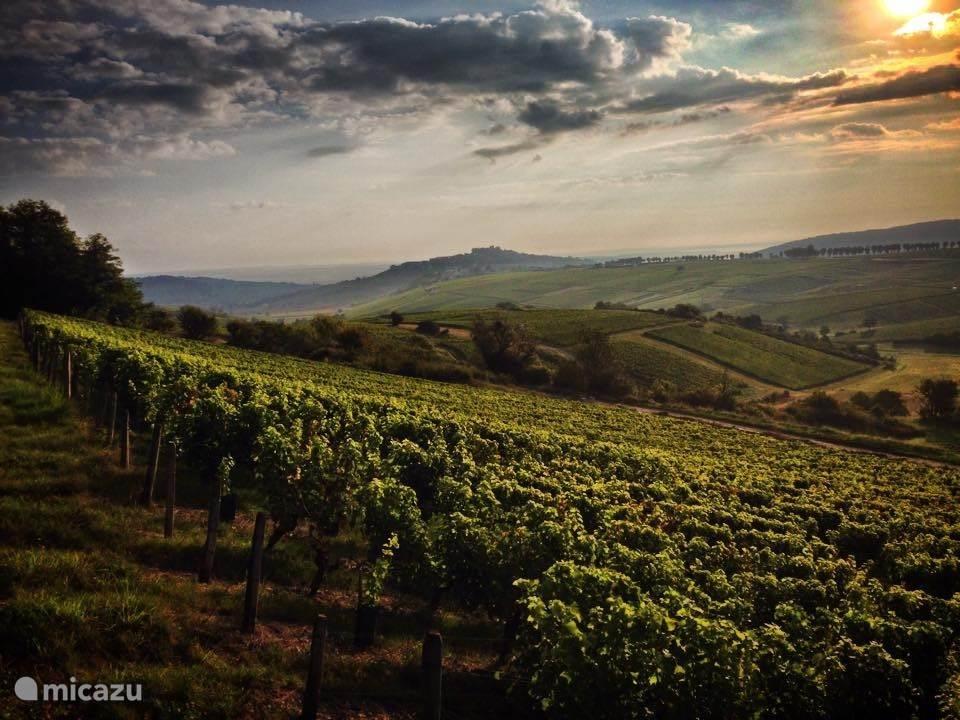 Wijngaarden van Sancerre
