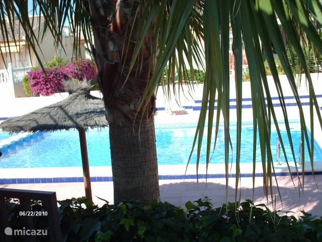 Uitzicht vanuit onze keuken op het gemeenschappelijk zwembad.