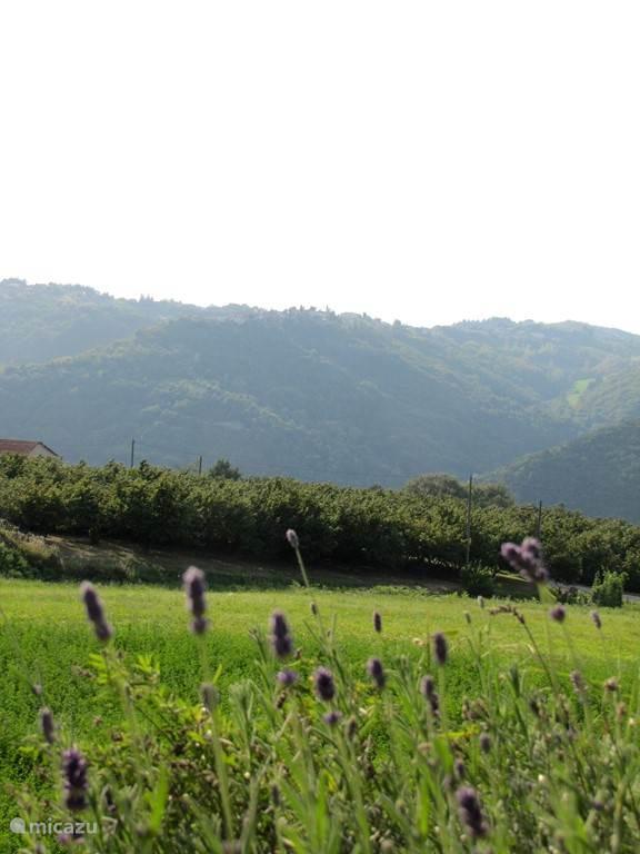 Panorama vanuit het terras