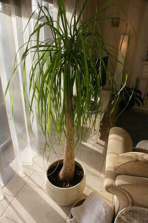 Planten in het huis brengen een warme sfeer