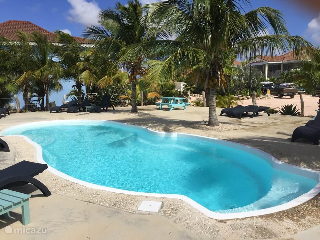Der Pool ist von Palmen umgeben.