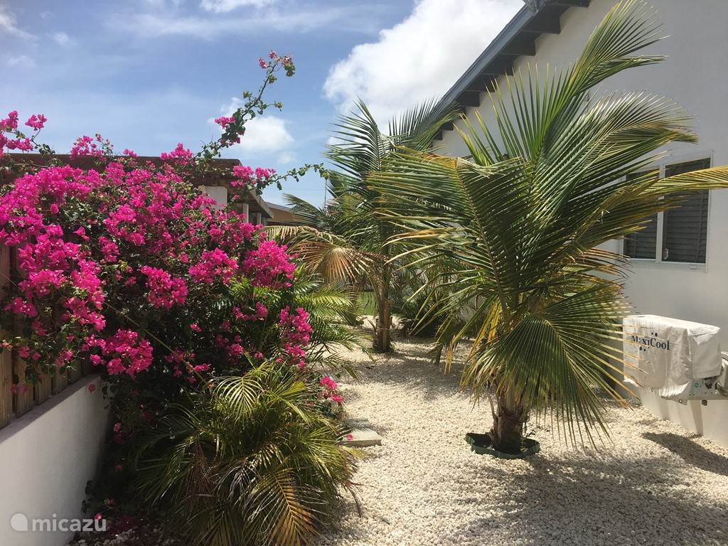 Vacation rental Aruba, North, Eagle Beach Villa Villarosa