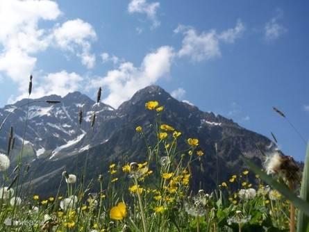 Vakantiehuis Oostenrijk, Vorarlberg, Mittelberg appartement Alpenroos