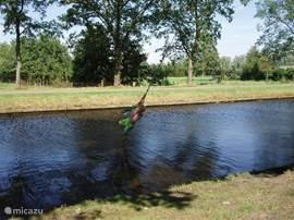 De kinderen hebben dolle pret met het touw in de boom al slingerend boven het water, spannend!