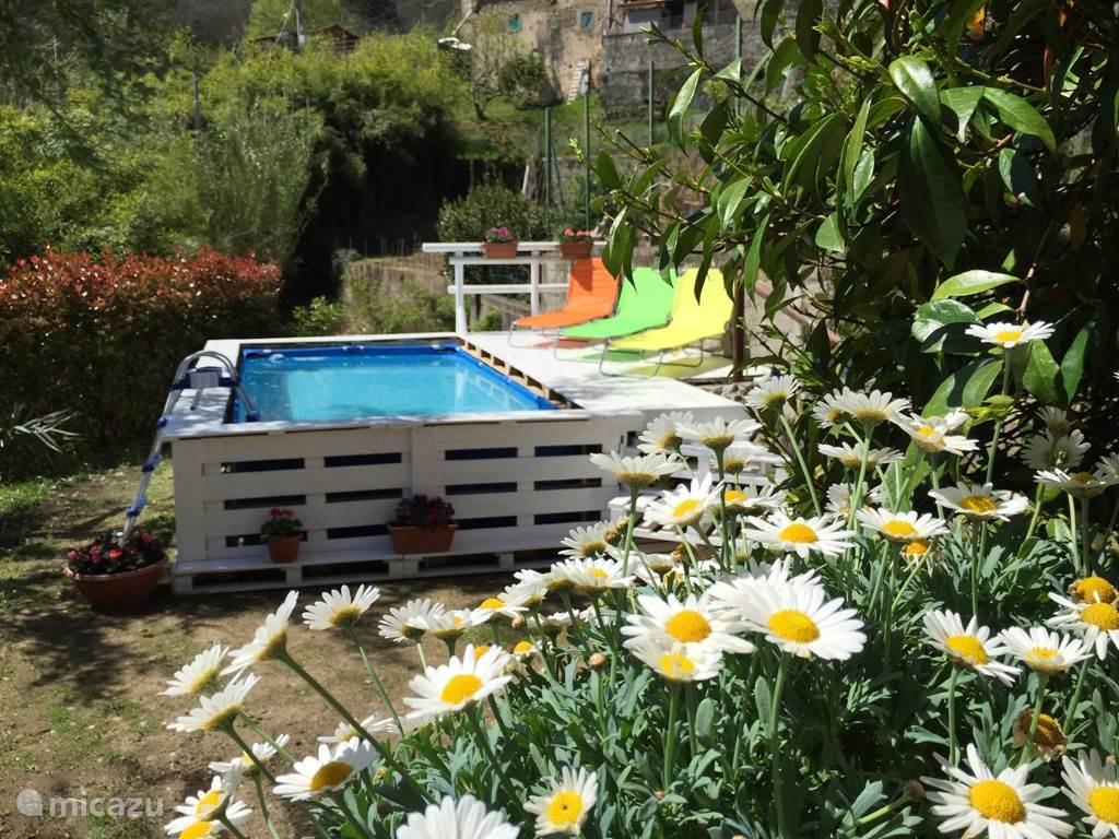 zwembad in zonnige tuin