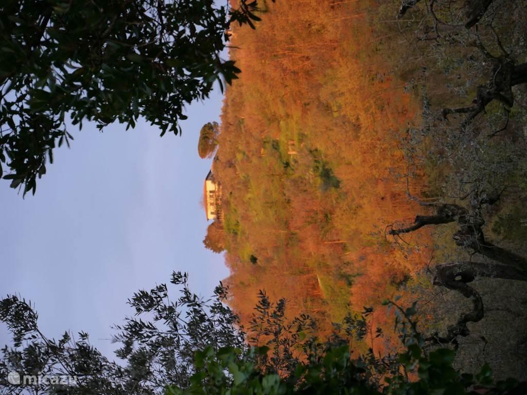 Prachtige verkleuringen in de herfst