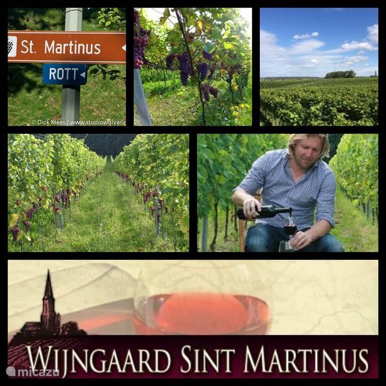 Wijngaard St Martinus
