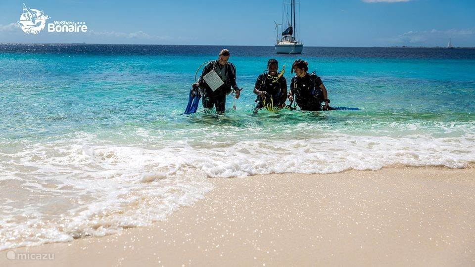 Bonaire ist eines der besten Tauchplätze der Welt!