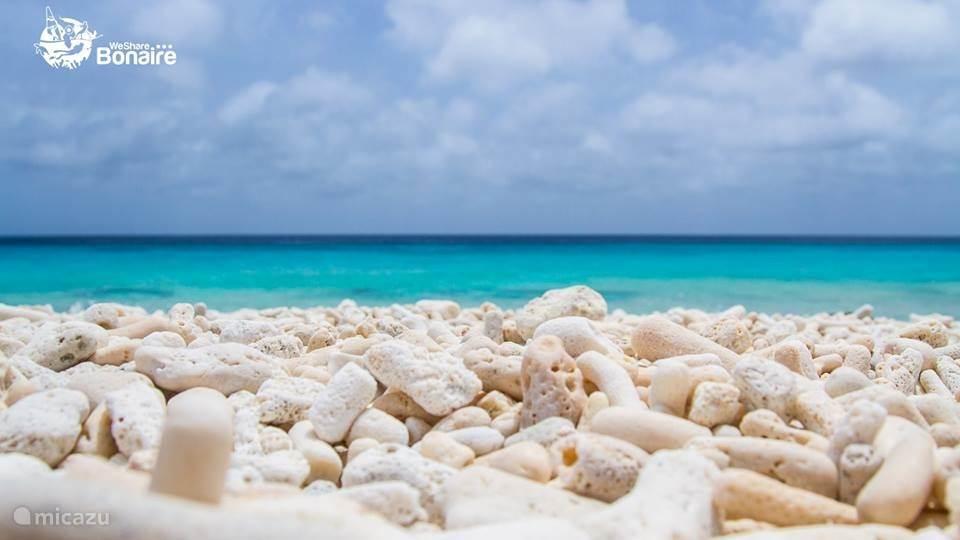 Koraal op Pink Beach Bonaire