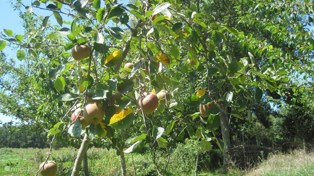 volop fruit