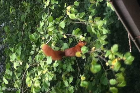 Eichhörnchen als Nachbarn