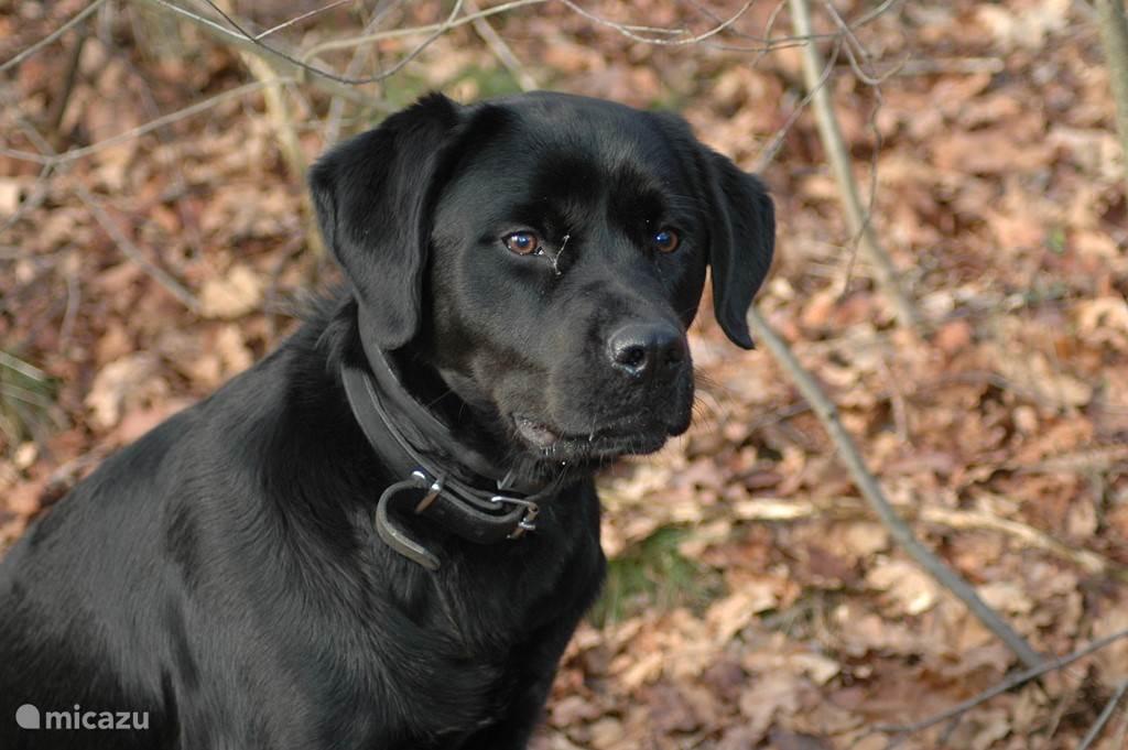 Luna onze lieve hond