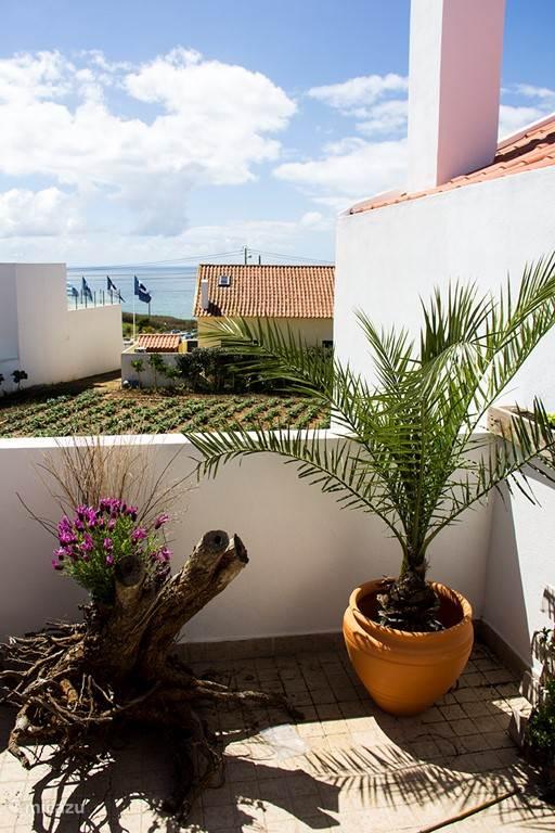 Mijn nieuwe exotische palm op het balkon versterkt de heerlijke zuid Europeaanse sfeer!