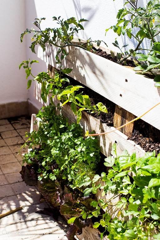Kleine groenten/kruiden tuintje op het balkon. In de zomer zal deze volop bloeien en lekkere aardbeien en tomaten opbrengen. Door de gasten te gebruiken.