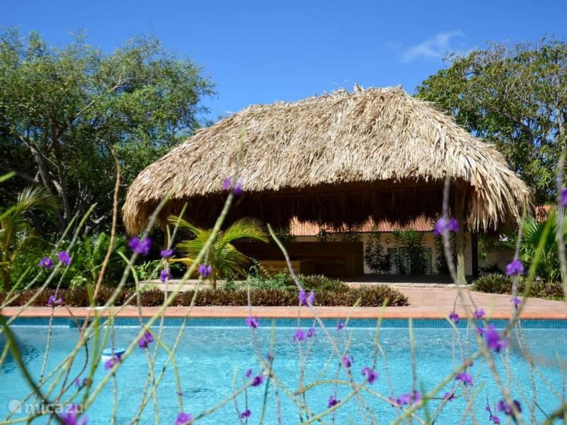 Palapa met loungeset naast het privé zwembad!