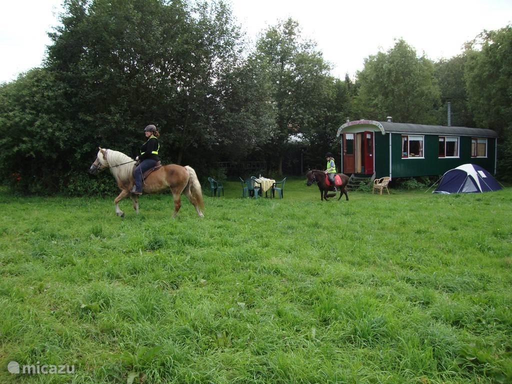 Ook paarden kunnen in overleg mee