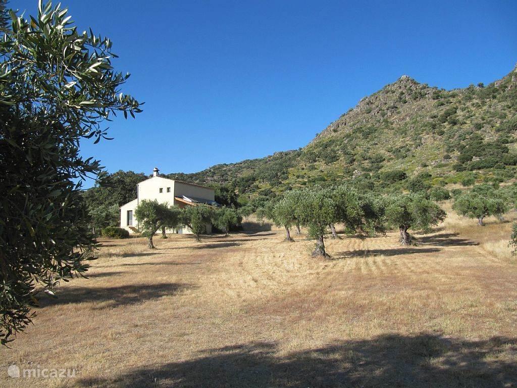 Vakantiehuis Spanje, Extremadura, Montánchez - vakantiehuis Huis met privézwembad in olijfgaard