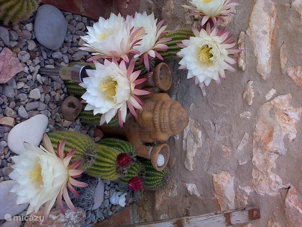 detail in onze tuin