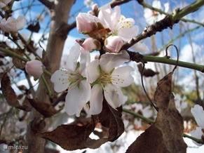 Prachtige bloesem in het voorjaar