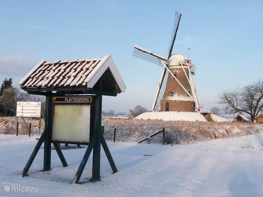 de molen van Rekken in de winter