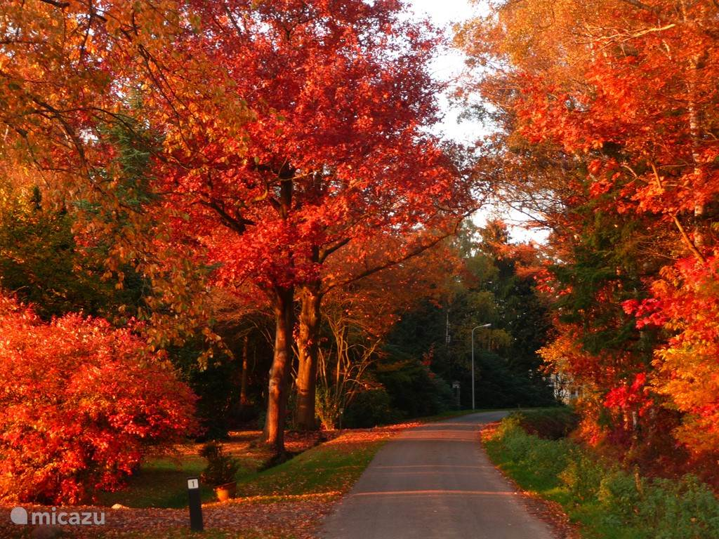 Herfstkleuren in de directe omgeving