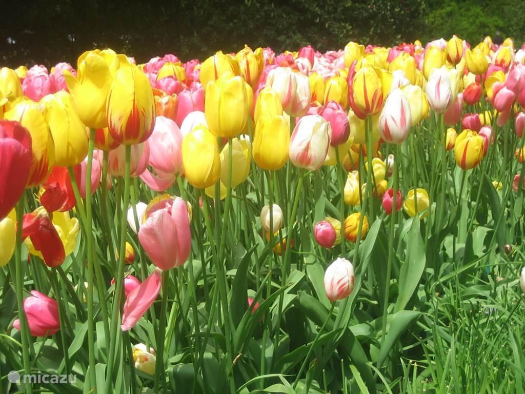 Kom in het voorjaar heerlijk genieten van de rust en ruimte hier in Drenthe