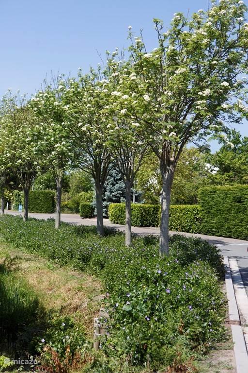 Laantje in het park