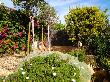 een deel van alle beplanting, diverse fruitbomen, oleanders en bougainvilles