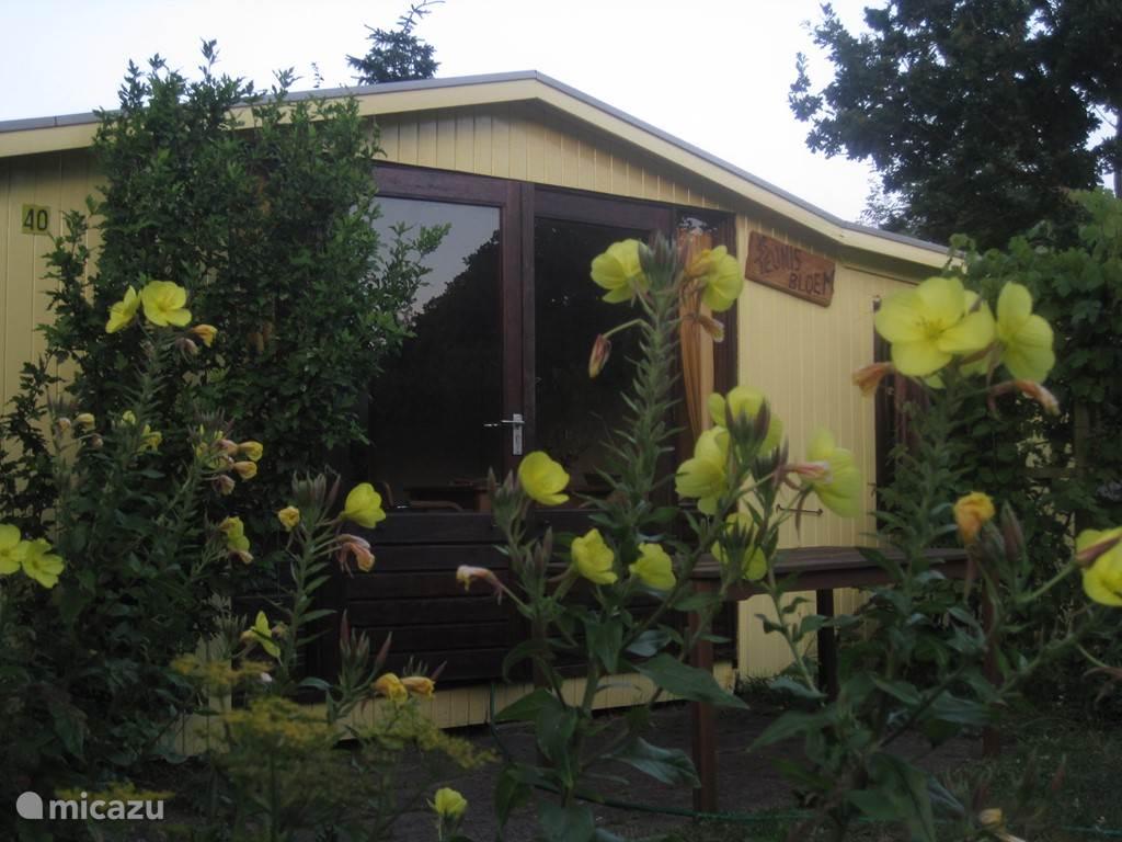 Vakantiehuis Nederland, Noord-Holland – vakantiehuis Duinhuisje Teunisbloem
