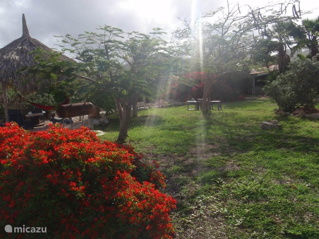 Tropische tuin met Palapa en Barbeque