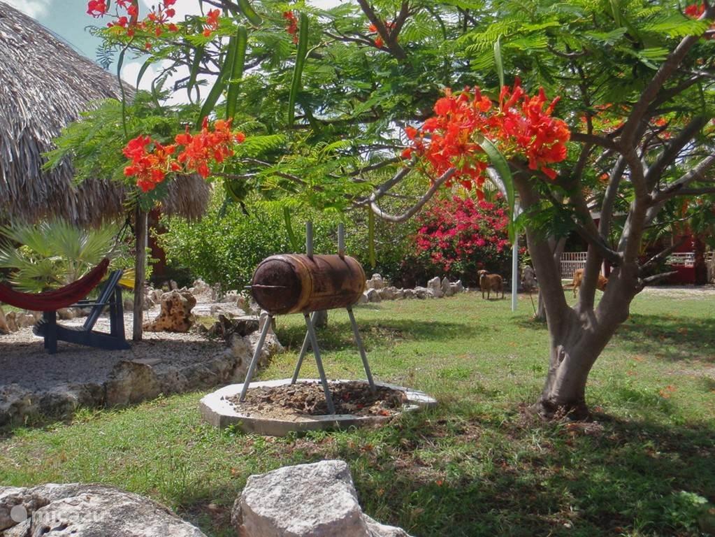 Tropische Tuin met Palapa en Barbecue plaats