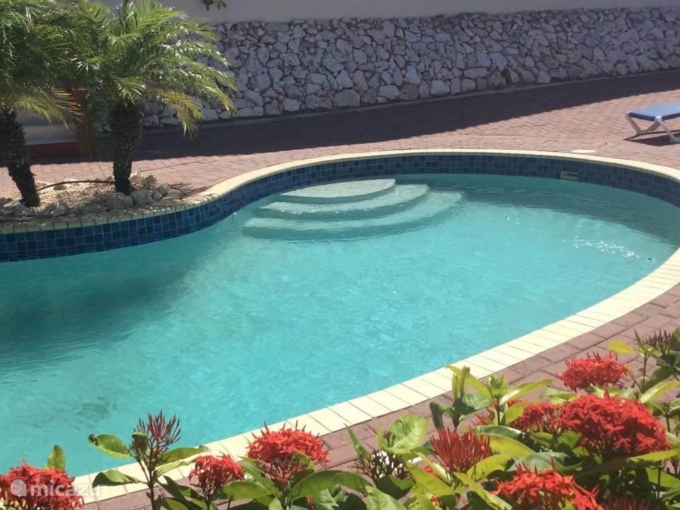 Zwembad/Pool