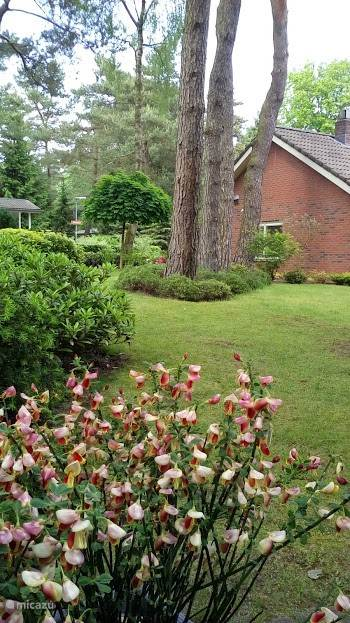 zicht vanuit tweede zitje op de tuin