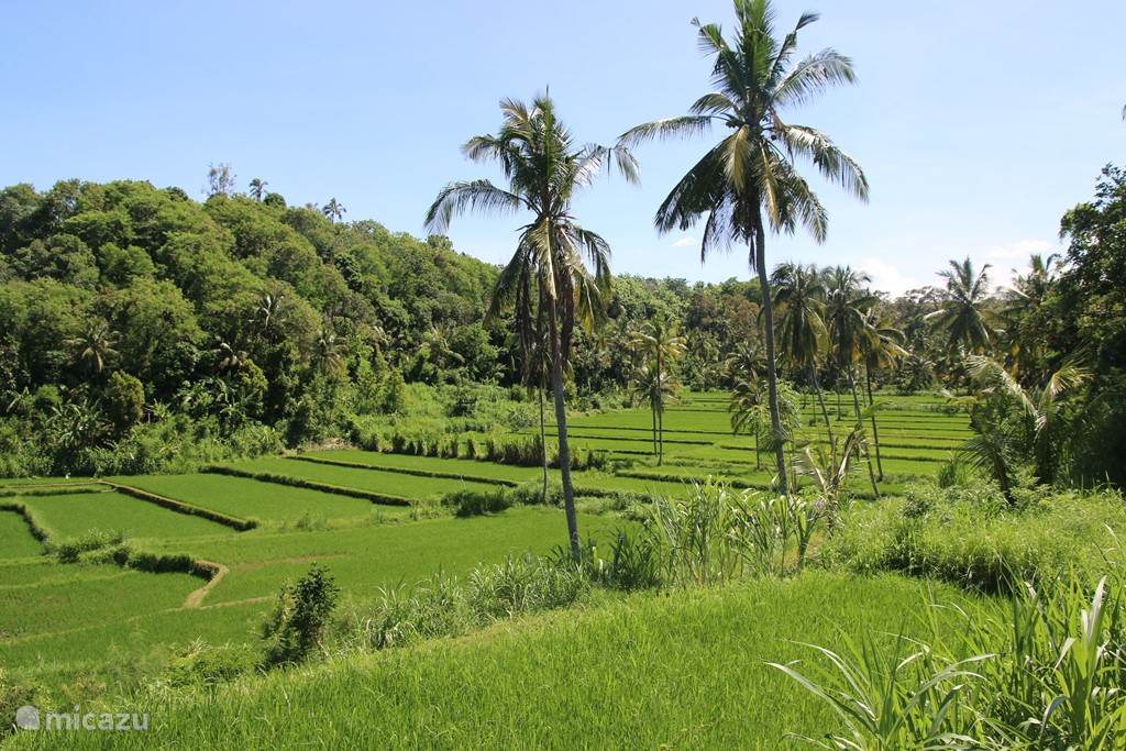 Enjoy a unique walk through the rice fields, directly adjacent Villa Riang.