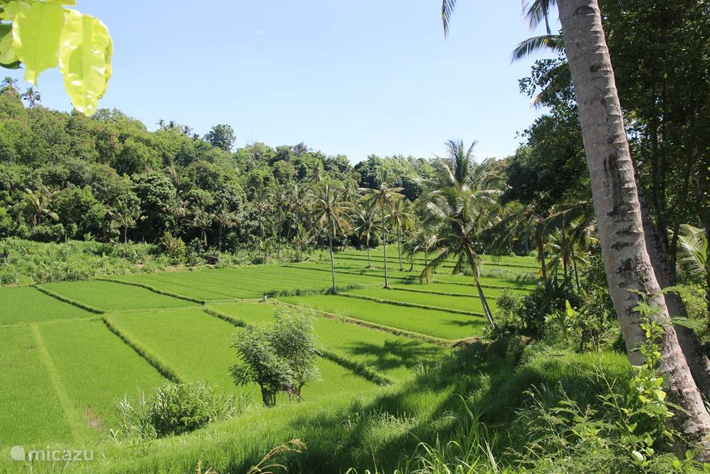 The villa is surrounded by beautiful rice fields.