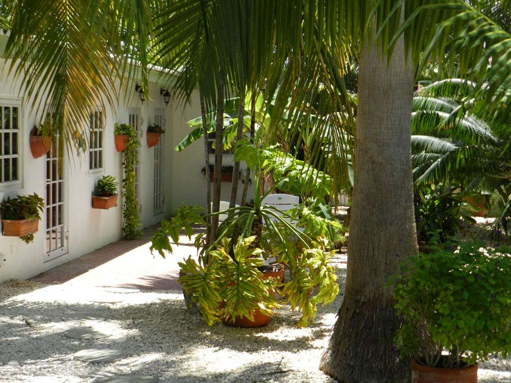 Vacation rental Curacao, Banda Ariba (East), Cas Grandi bed & breakfast B&B Sombré di Kabana