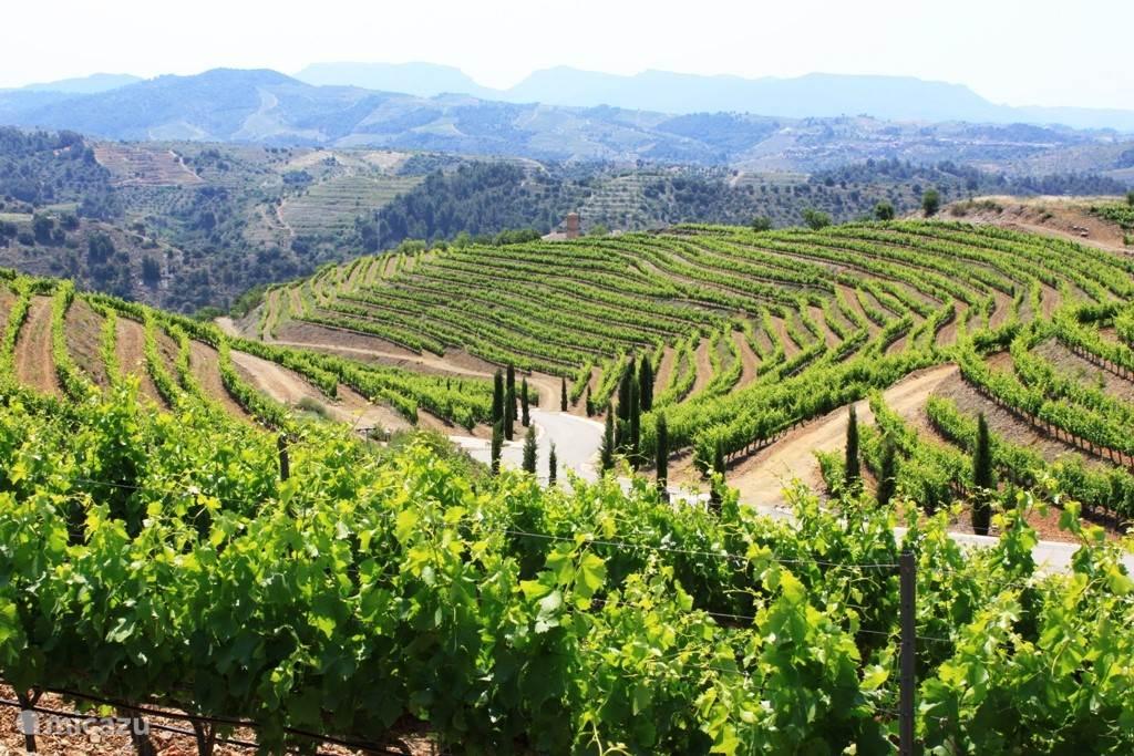 Wijngebieden