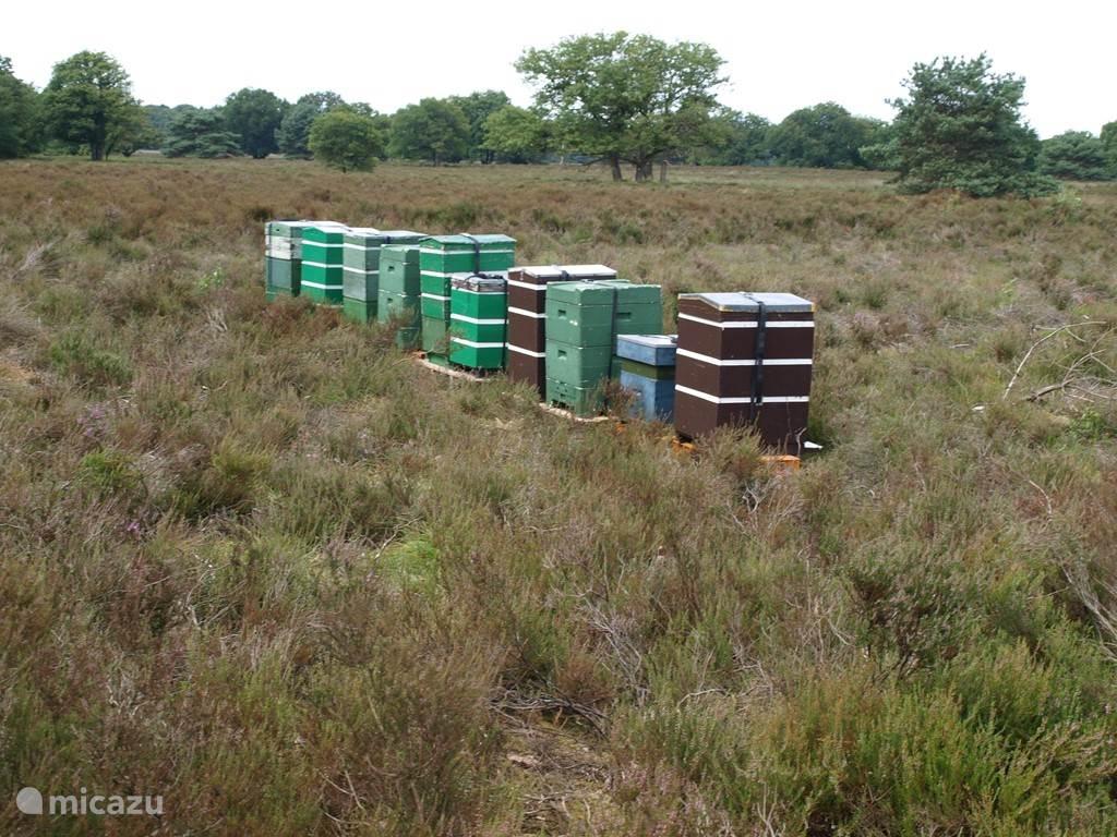 Bijenkasten op de heide tussen Vierhouten en Elspeet