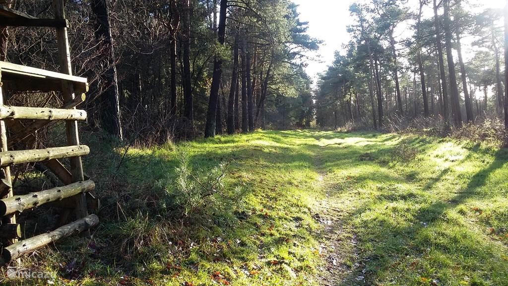Vanuit de woning kun je zo de bossen inlopen waar je uren kunt dwalen zonder een mens tegen te komen.