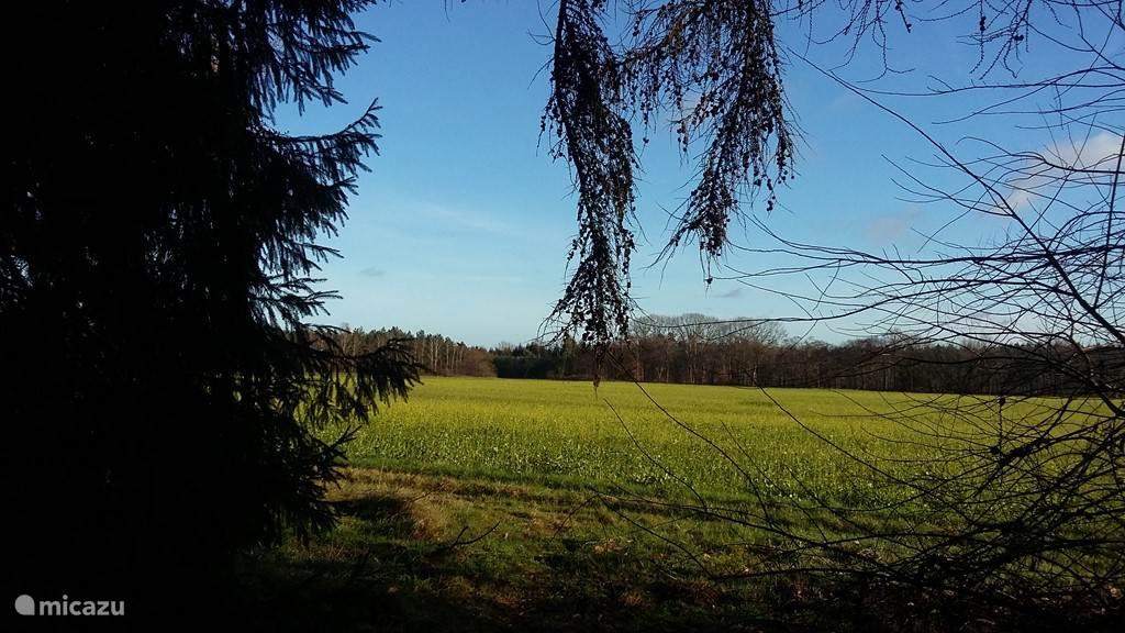 Uitzicht over een akker vlakbij Wielen aan de rand van het bos.